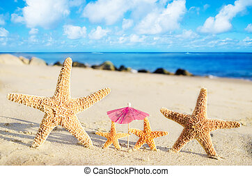 Starfishes on the sandy beach - Four Starfishes on the sandy...