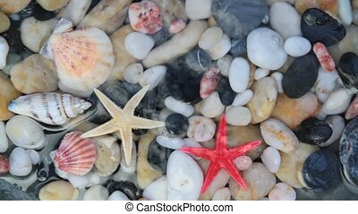 Starfishes, pebble stones and seashells in crystal clear...