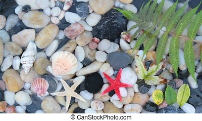 Starfishes, pebble stones ,seashell - Starfishes, pebble...