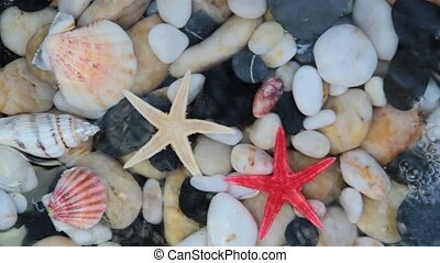 Starfishes, pebble stones, seastar - Starfishes, pebble...
