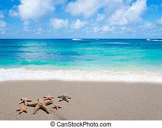 starfishes, sandstrand, sandig