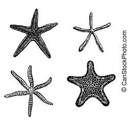 Starfishes - Set of 4 hand - drawn starfishes