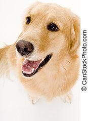 A pet dog looking up at the camera