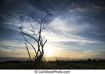 Stark bush silhouette against stunning sunset sky