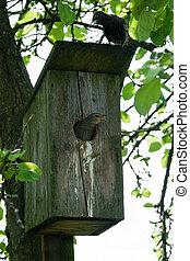 starling near her house closeup