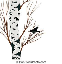 starling on birch drawing, vector illustration