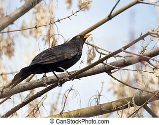 starling on tree