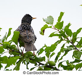 Starling perched on a branch