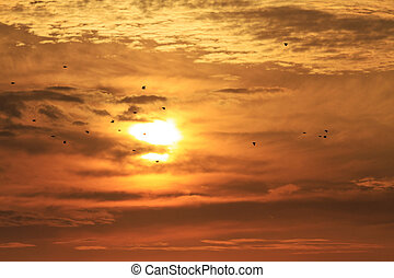 starlings flying in the background sunrise