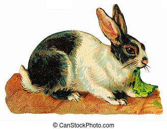 starożytny, wizerunek, króliki