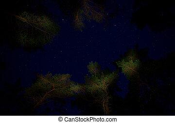 Starry night sky and tree tops