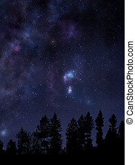 Starry night sky over the forest
