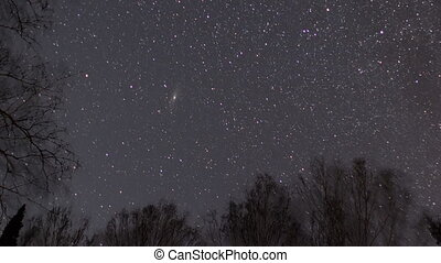 Starry sky against a background of trees.