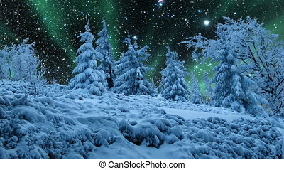 Time lapse of starry night sky and aurora borealis over frozen woods