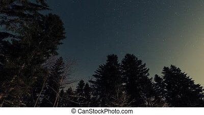 starry sky in the winter forest timelapse video.