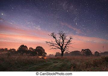 Night landscape with path under stars