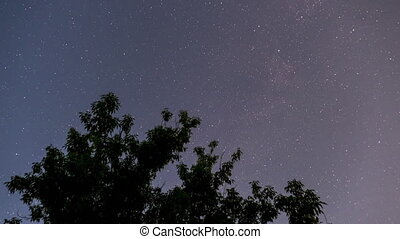 Stars in the night sky rotate. Time Lapse. Night sky moving on the background of a tree silhouette. Astronomy timelapse of twinkling stars and planets. Stars spinning over Earth.