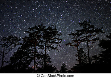 Stars in the Sky at Night