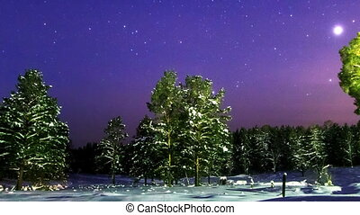 Stars over the winter forest. Time Lapse