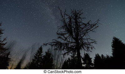 Stars sky with milky way galaxy moving over dead tree time lapse. Astronomy starry night