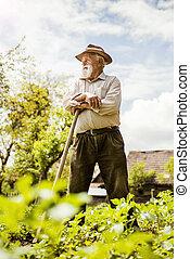 stary, łąka, rolnik