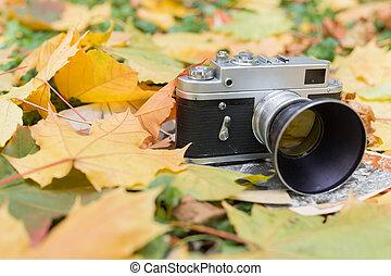 stary, liście, do góry, jesień, fotografie, aparat fotograficzny, zamknięcie