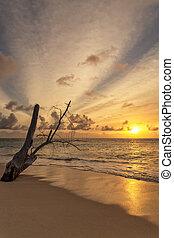 stary, sceniczny, drzewo, marzycielski, tło, pień, zachód słońca plaża, niebo