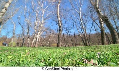 static shot of grass and trees in early spring park - Wide ...