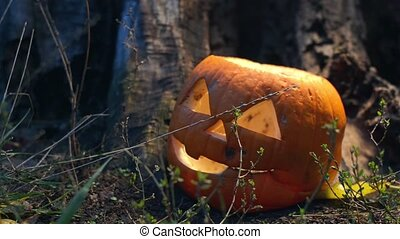 Static shot of terrible rotten pumpkin covered with mold near an old wooden stump is lit by a bright light that moves in different directions. Jack-o-lantern lying in the grass prepared for Halloween