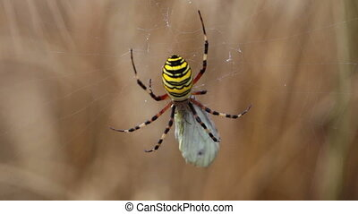 Static spider on cob waving in wind - Close up view at...