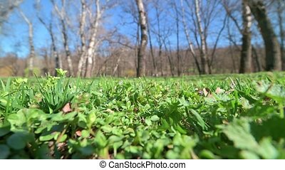 static windy shot of grass and trees in early spring park - ...