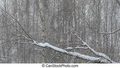 statique, park., coup, hiver, chute neige