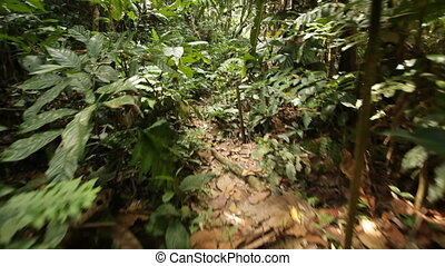 steadicam point of view walking in jungle path, Malaysia