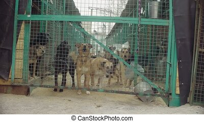 Dogs in aviary in a dog shelter - Steadicam shot. Dogs in...