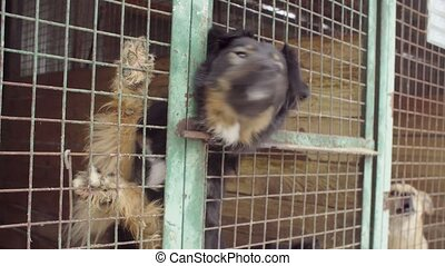 Dogs in aviary in a dog shelter waiting for food - Steadicam...