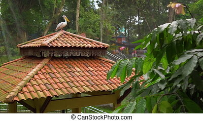 Steadicam shot of a bird park with a waterfall and long walkways in tropics. Camera reveals a pelican sitting on top of a pavilion.