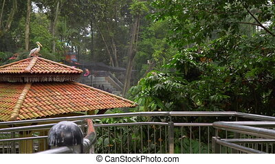 Steadicam shot of a bird park with a waterfall and long...