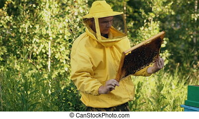 Steadicam shot of beekeeper man checking wooden frame before harvesting honey in apiary
