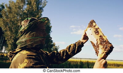 Steadicam shot of Beekeeper man checking wooden frame before harvesting honey in apiary on sunny day