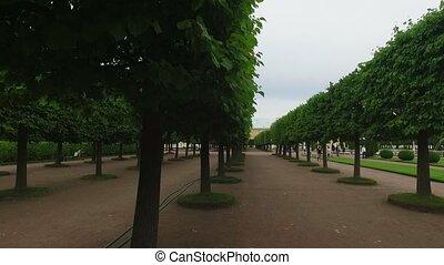 Steadicam shot of trees in park at summer