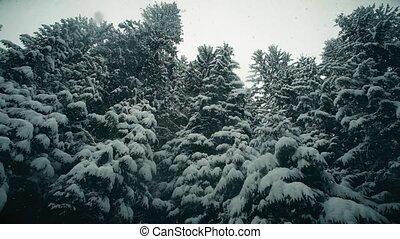 Steadicam walk along snowy trees in snowfall - Steadicam...