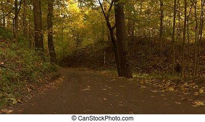 Steadicam walk through autumn forest road. 4K video