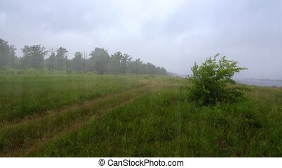 Steady rain pours down on a broad meadow which lies along a riverbank, as wind stirs a young tree's branches.