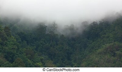 Steam Rising from Tropical Rainforest in Timelapse -...