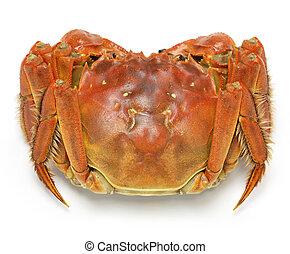 steamed chinese mitten crab, shangh