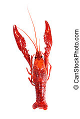 steamed crawfish isolated on white background