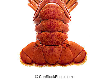 Steamed lobster seafood on white background