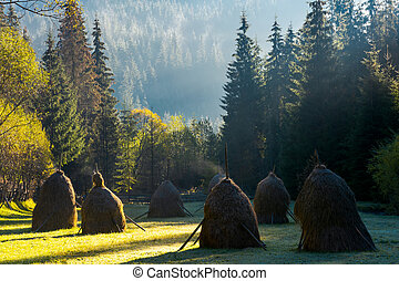 steaming haystacks in the forest at sunrise
