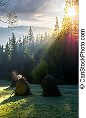 steaming haystacks in the forest at sunrise - steaming...