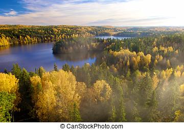 steamy, foresta